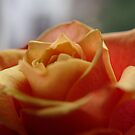 Rose of Love by TriciaDanby