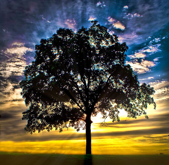Morning Glory - Tree in a beautiful sunset by factor