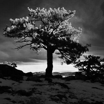 Donner Lake Summit Tree by Tomreagan