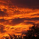 Red waves above the trees by christopher363