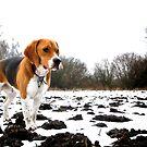 Fletcher In The Field II by rharvey