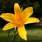 Flower by kgb224