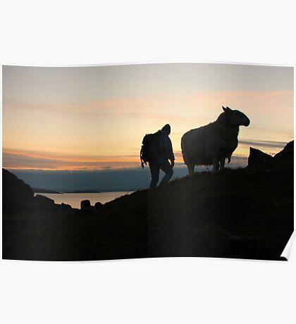 Man and sheep  Poster