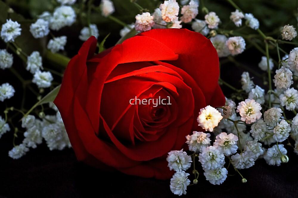 Rose of Love by cherylc1