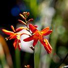 Fire Flower by Josh Prior
