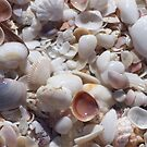 Sanibel Shell Hash by DianaTaylor/ JacksonDunes