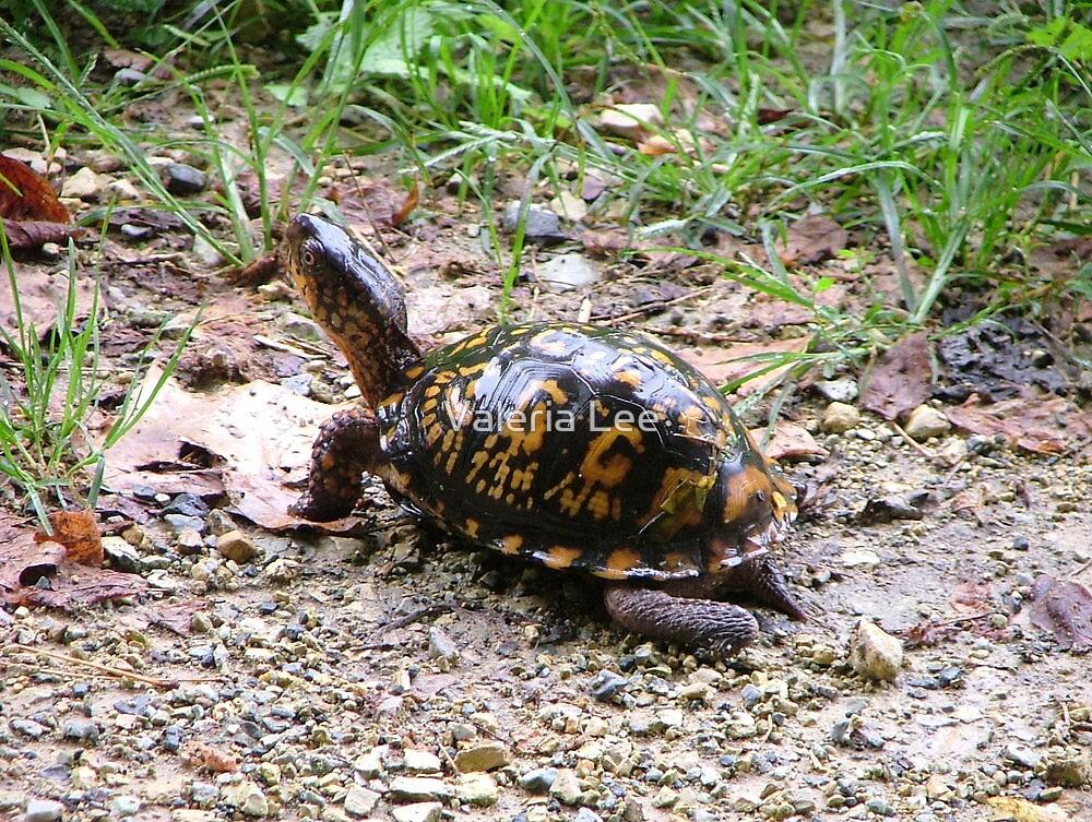 Box turtle by Valeria Lee