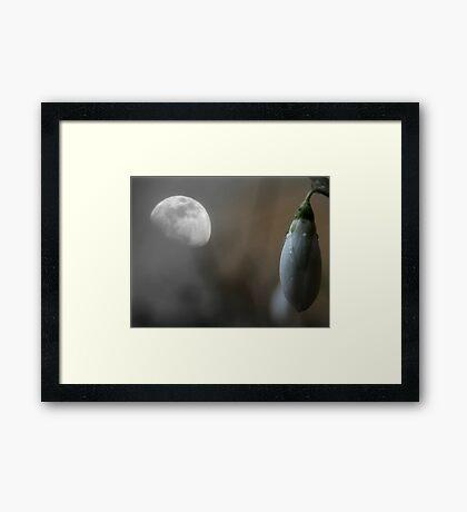 Growing Through the Night Framed Print