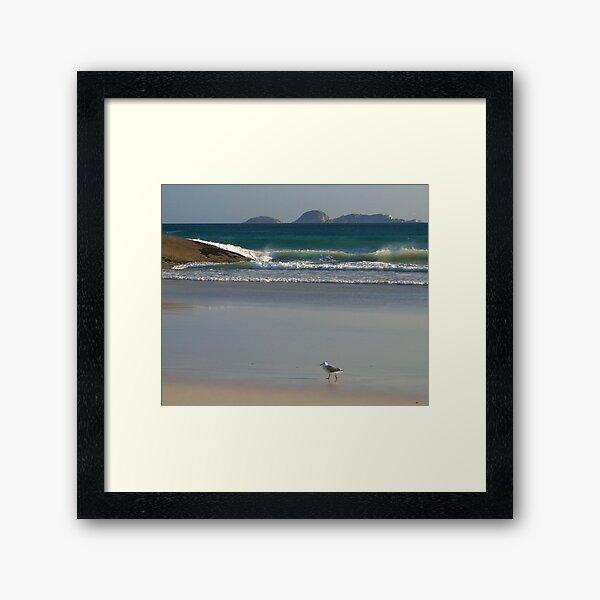 Evening Stroll, Wilsons Promontory Framed Art Print