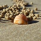 A crab's life! by leahb