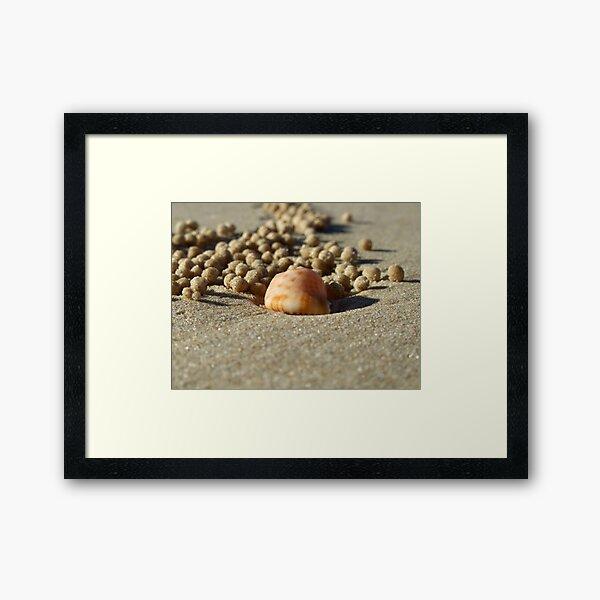 A crab's life! Framed Art Print