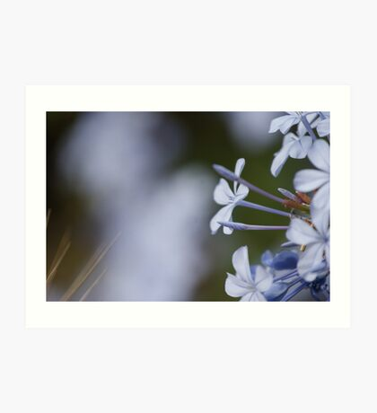 Little Blue Flower Art Print