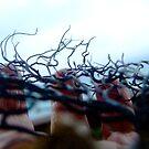 seaweed by leahb