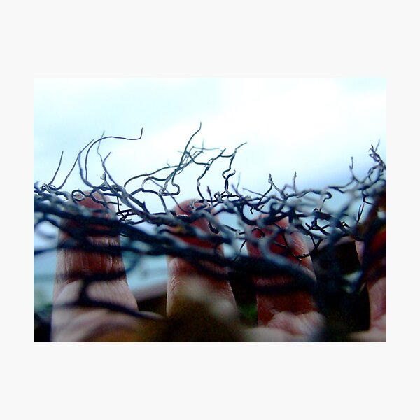 seaweed Photographic Print