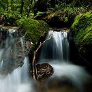 Shallow Water 4 by Michael Treloar
