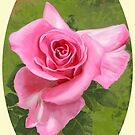 Pink rose by Victoria  _Ts