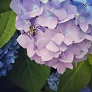 Hydrangea and Bee by Colleen Drew