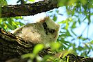 Great Horned Owl Chick #1 by Vickie Emms