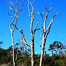 The Tree Amigos by bribiedamo