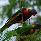 A Colourful Pair by Graham Mewburn
