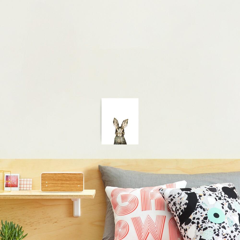 Little Rabbit Photographic Print