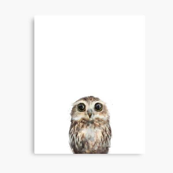 Little Owl Canvas Print