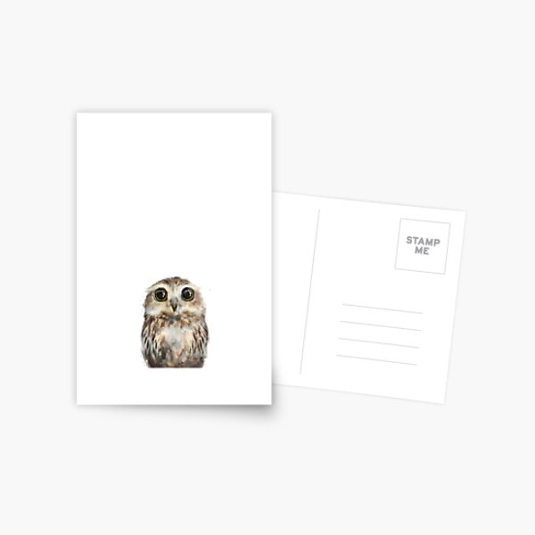 Little Owl Postcard