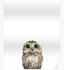 Little Owl Poster