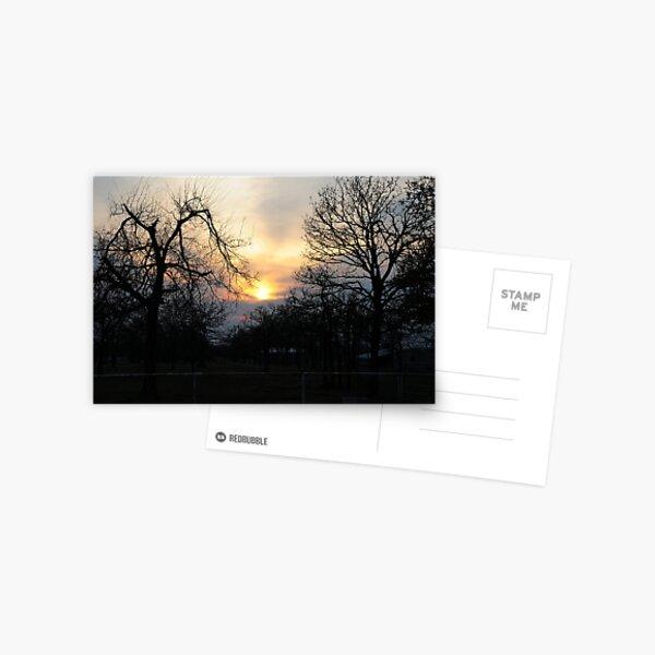 Trees At Sunset Postcard