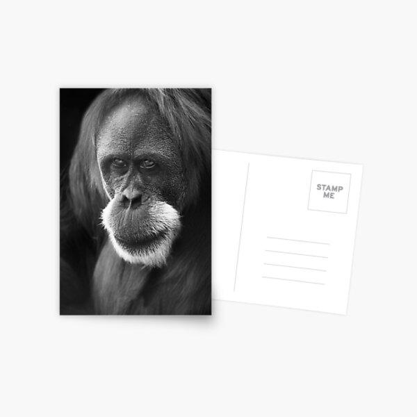 The Elder Postcard