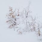 Fresh Snow...Black Forest by Angelika  Vogel