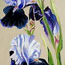 Blue Bearded Iris by Julie Ann Accornero