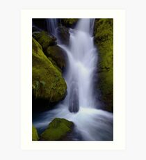Whitehead Creek #6 - luminescence Art Print