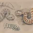 Death Adder by SnakeArtist
