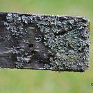 Im Flechten dieses Holz von GriffMAD