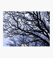 Dark Oak Photographic Print