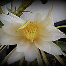 dragon flower by valandsnake