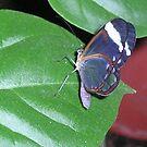 Butterfly  by mechelle853