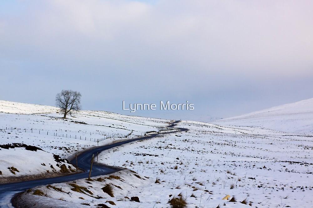 Alone by Lynne Morris