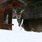 Deer by Elena Martinello