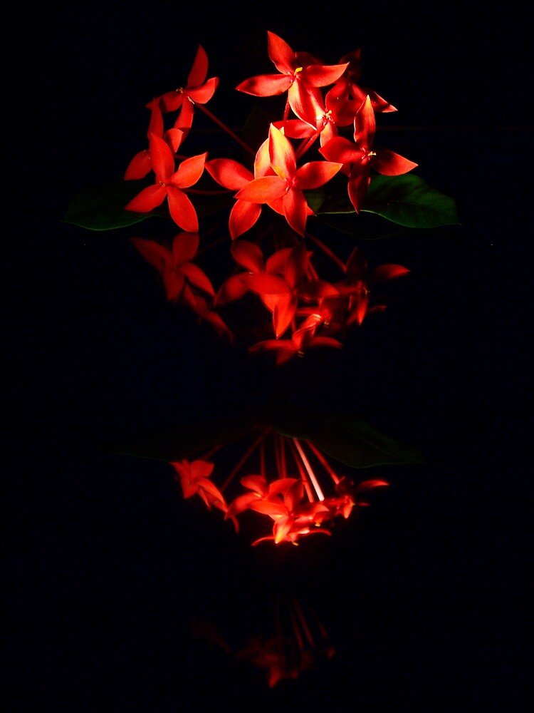 """Red Flowers Reflected on Black Background"" by goodieg ..."