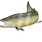 Brown Trout by David Pearce