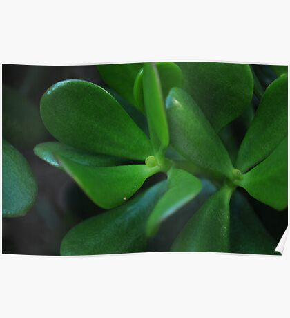 Succulent Leaves Poster