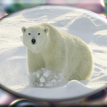 August Polar Bear by cabinfeverdavid