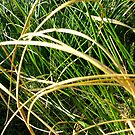 Twisted Weeds - Coromandel Peninsula by emerson
