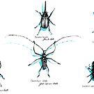 beetles by Barbara Baumann Illustration