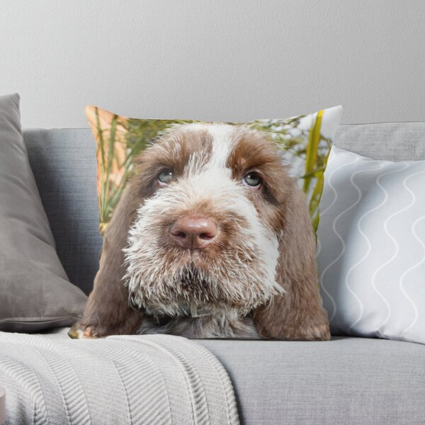 Brown Roan Spinone Puppy Throw Pillow