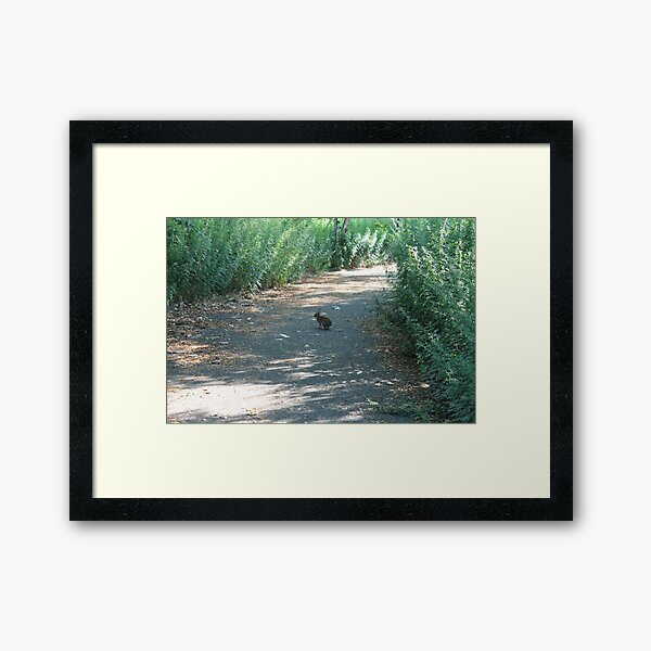 #nature #leaf #outdoors #wood #landscape #tree #water #summer #environment #grass #garden #road #travel #horizontal #nopeople #naturalpa Framed Art Print