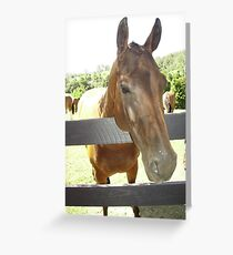 Brumby Looking over Fence. Greeting Card
