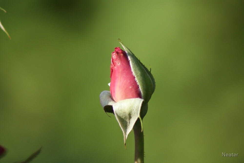 Yet to Bloom by Neater